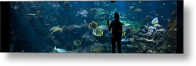 Sea-life Centre, France Metal Print by Alexis Rosenfeld