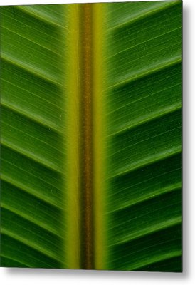 Wild Banana Leaf Metal Print