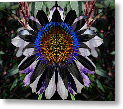 Coneflower Metal Print by Michele Caporaso