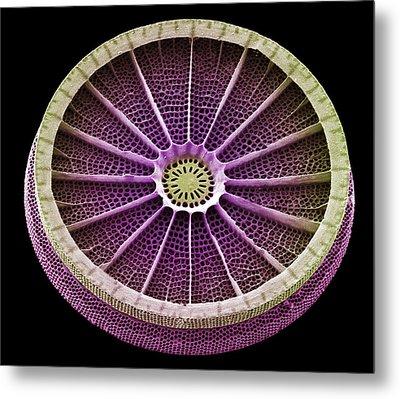 Diatom, Sem Metal Print by Steve Gschmeissner