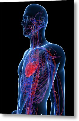 Cardiovascular System, Artwork Metal Print by Sciepro