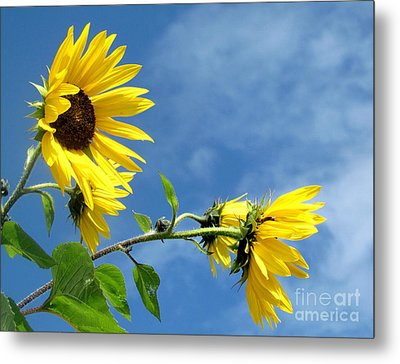 Metal Print featuring the photograph Sunflowers by France Laliberte