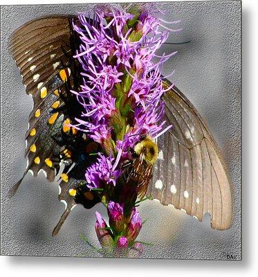 Butterfly Design Collection Metal Print by Debra     Vatalaro
