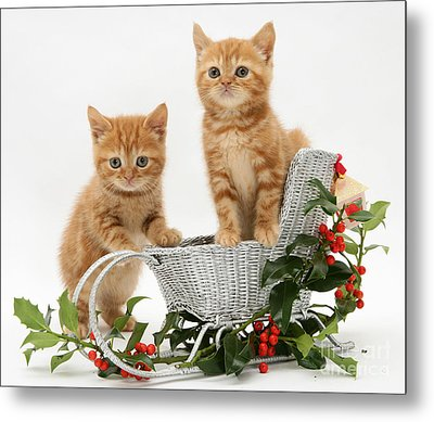 Kittens With A Sledge Metal Print