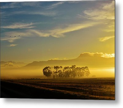 Blue Gum Trees Metal Print