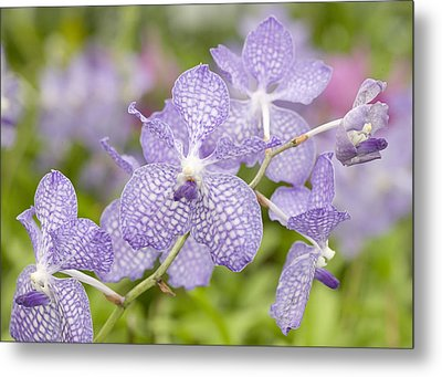 Metal Print featuring the photograph Orchid Flower Bloom by C Ribet