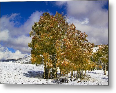 Rocky Mountain Fall Metal Print by Mark Smith