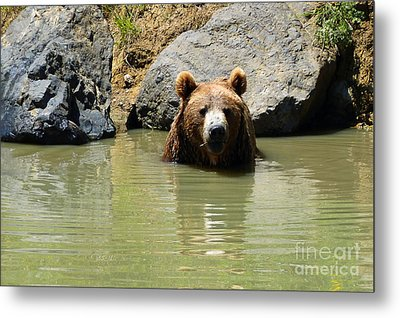 A Bear's Hot Tub Metal Print by Methune Hively