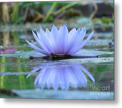 A Beautiful Water Lily Reflection Metal Print