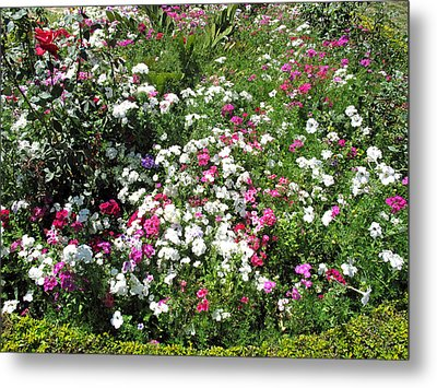 A Bed Of Beautiful Different Color Flowers Metal Print by Ashish Agarwal
