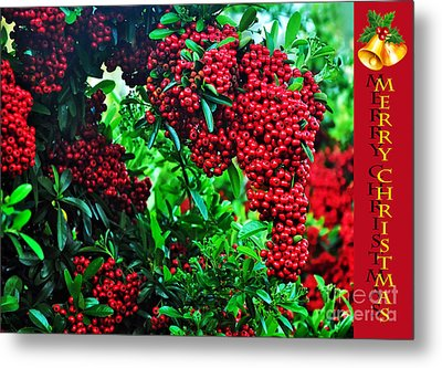 A Berry Merry Christmas Metal Print by Kaye Menner