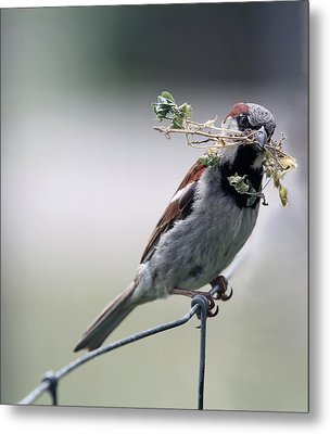 Metal Print featuring the photograph A Bird And A Twig by Elizabeth Winter