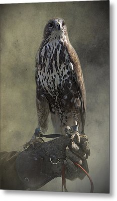 Metal Print featuring the photograph A Bird In The Hand by Ethiriel  Photography
