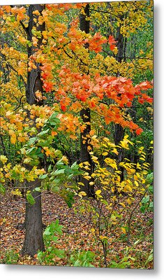A Blustery Autumn Day Metal Print by Frozen in Time Fine Art Photography