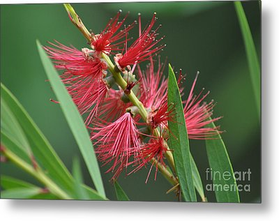 A Brush With Beauty Metal Print by Joanne Kocwin