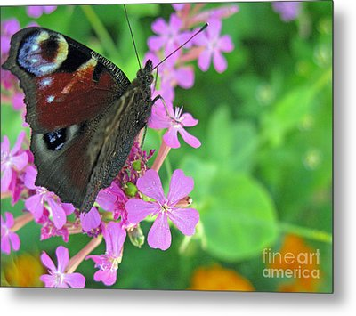 A Butterfly On The Pink Flower 2 Metal Print by Ausra Huntington nee Paulauskaite