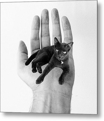 A Cat In The Hand Is Worth Metal Print by Cameron Bentley