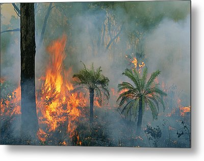 A Controlled Fire Helps Prevent Metal Print by Randy Olson