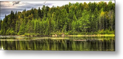 A Day In The Forest Of Maine Metal Print by Gary Smith