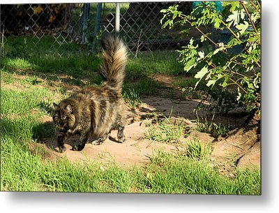 A Different Calico Cat Metal Print by Cheryl Poland
