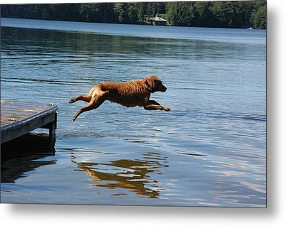 A Dog Jumps Into A Lake Chasing A Ball Metal Print by Stacy Gold