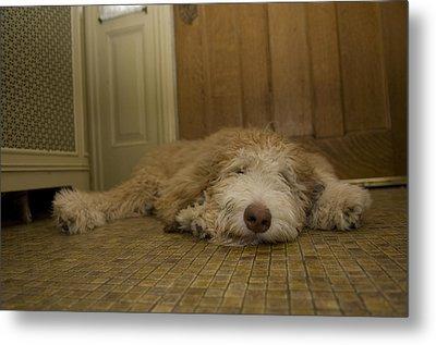 A Dog Lies On A Linoleum Floor Metal Print by Joel Sartore