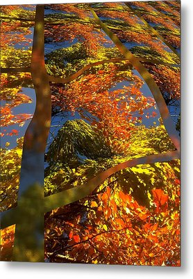 A Fall Perspective Of Color Metal Print by Rene Crystal