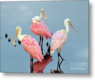 Metal Print featuring the photograph A Family Gathering by Kathy Baccari