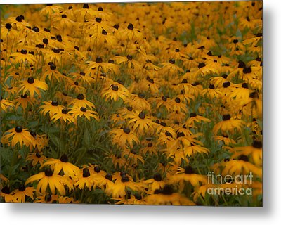 A Field Full Of Flowers Metal Print by Michael Rucci