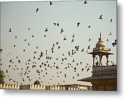 A Flock Of Pigeons Crowding One Of The Structures On Top Of The Red Fort Metal Print by Ashish Agarwal
