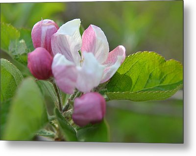 A Flower In The Wild Metal Print by Artie Wallace