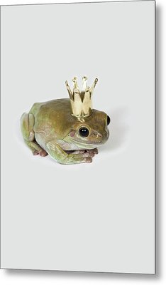 A Frog Wearing A Crown, Studio Shot Metal Print by Paul Hudson