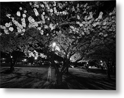 A Ghost In The Cherry Blossoms Metal Print by Shirley Tinkham