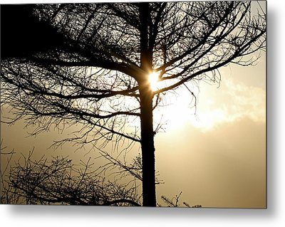 A Golden Day Metal Print by Marie Jamieson