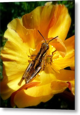 A Grasshopper Breakfast Metal Print by Cindy Wright