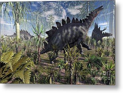A Group Of Herbivore Stegosaurus Metal Print by Mark Stevenson