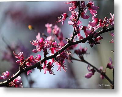 Metal Print featuring the photograph A Hint Of Spring  by Amy Gallagher