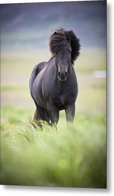A Horse With Its Mane Blowing In The Metal Print by David DuChemin