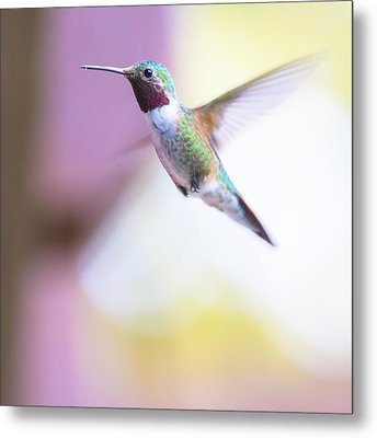 A Humming Bird In The Rocky Mountains Metal Print by Ellie Teramoto
