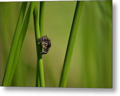 Metal Print featuring the photograph A Jumper In The Grass by JD Grimes