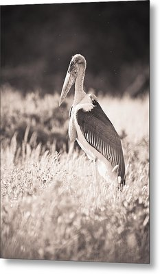 A Large Bird Stands In The Grass Metal Print by David DuChemin