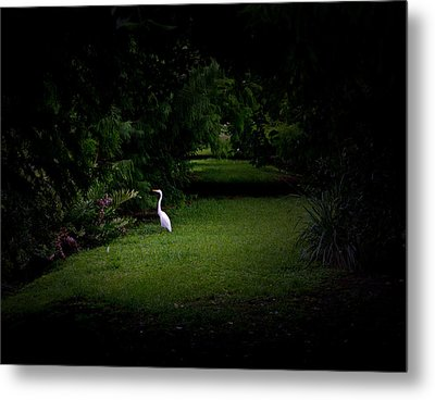 A Light In The Forest Metal Print by Mark Andrew Thomas