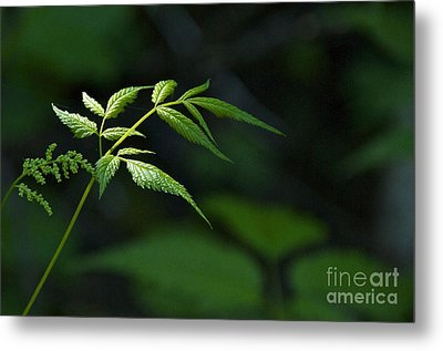 A Light In The Forest Metal Print by Sean Griffin