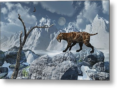 A Lone Sabre-toothed Tiger In A Cold Metal Print by Mark Stevenson