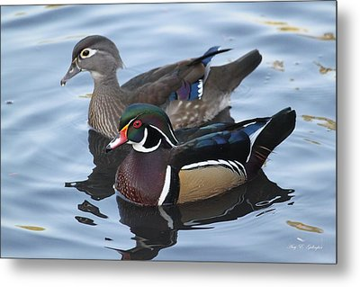Metal Print featuring the photograph A Lovely Pair by Amy Gallagher