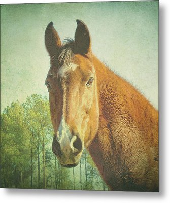 Metal Print featuring the photograph A Loving Soul by Robin Dickinson
