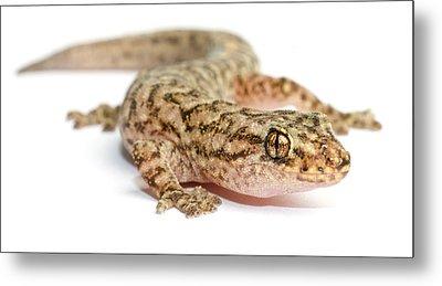 A Marble Gecko Sits In Studio Striking Metal Print by Brooke Whatnall