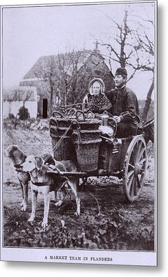 A Market Team In Flanders. Two Dogs Metal Print by Everett