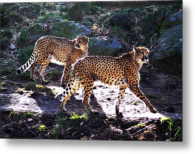 A Pair Of Cheetah's Metal Print by Bill Cannon