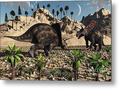 A Pair Of Torosaurus Dinosaurs Fight Metal Print by Mark Stevenson